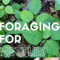 FORAGING-featured image