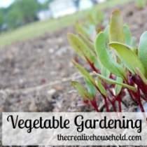 vegetable gardening basics-featured