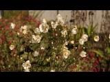 Fall Gardening Quick Tips