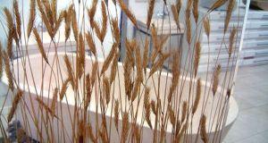 Rye Straw Curtain