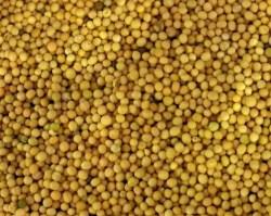Mustard Seed Benefits