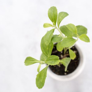 Curated Kitchen: Health Benefits of Stevia Leaf