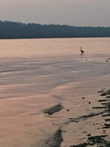 A heron flew in to do some fishing while we were on the beach.
