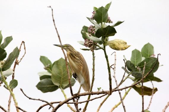 Majete Malawi Birdlife