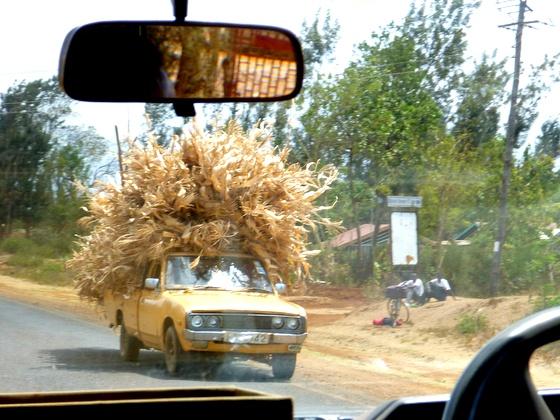 Hauling corn in Kenya