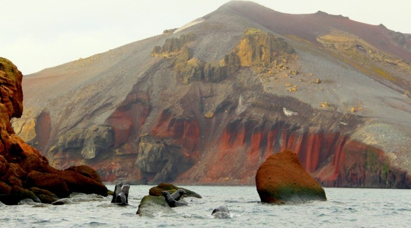 Deception Island Antarctica Seals-HoneyTrek.com
