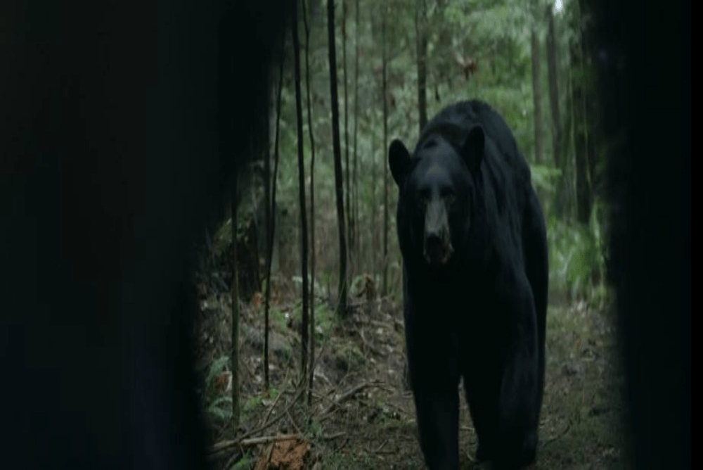 4. Backcountry, bear2