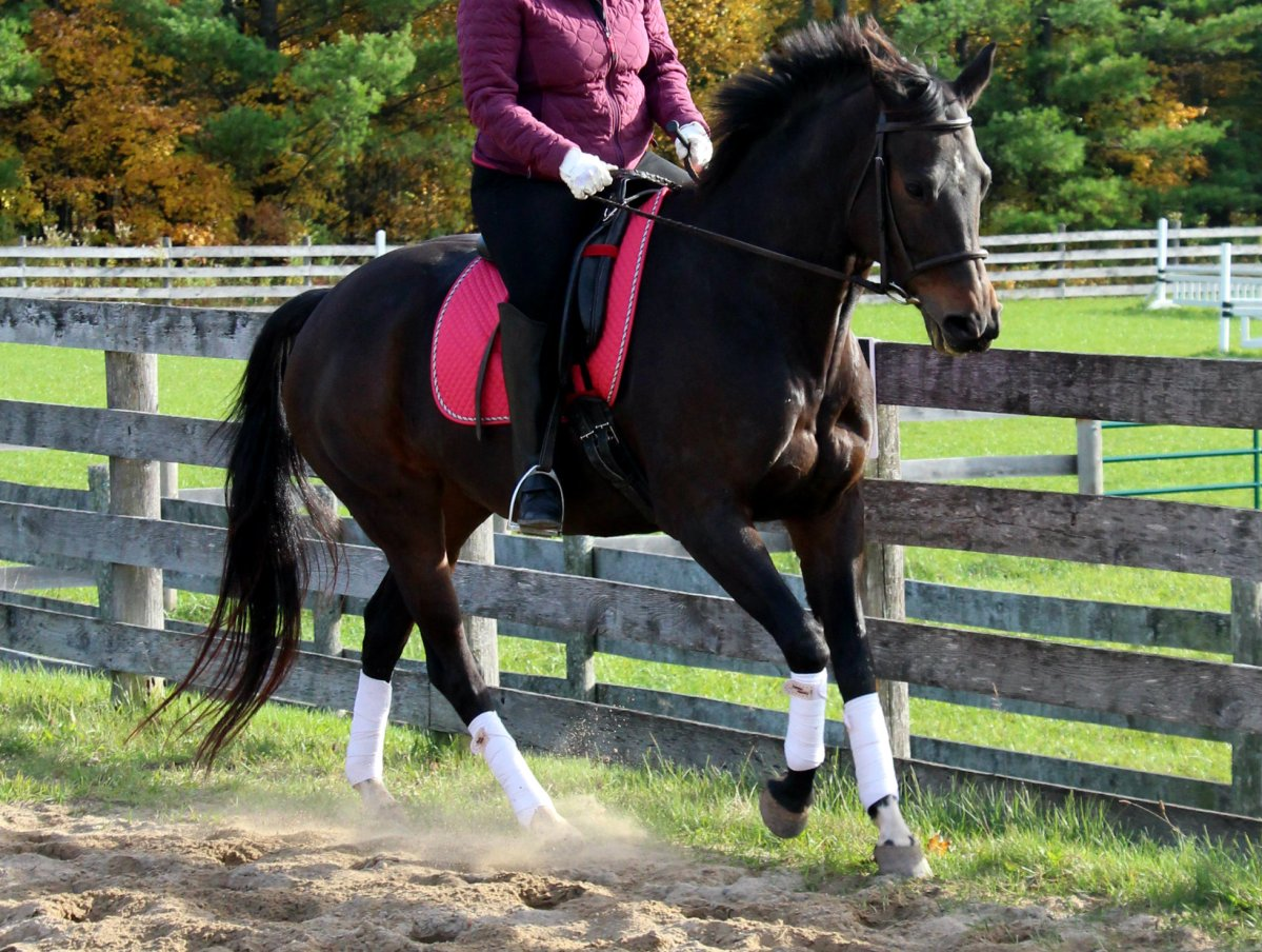 How To Improve YOUR Trot-Canter Transitions