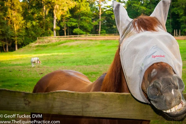 Aug Sept 2015 - Equine Rounds Newsletter main image