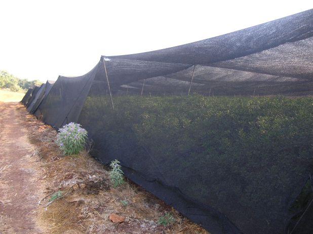 חממות צמחי נוי במושב ציפורי