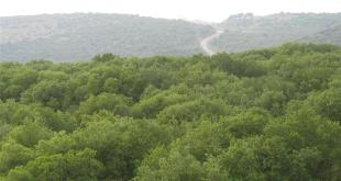 Reihan_forest