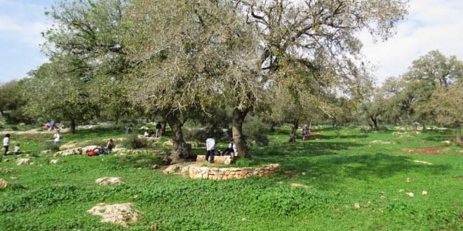 שמורת אלוני אבא - צילום: יוחאי כורם