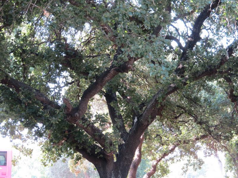 בית לחם הגלילית- גן ההנצחה