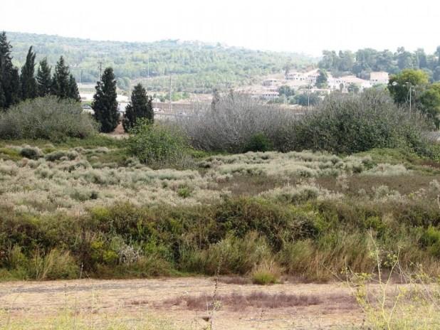 מבט כללי על השמורה מתל אסור. ברקע - קיבוץ ברקאי צילום: Hanay