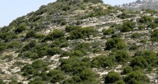 טור שמעון - חורבת טורה