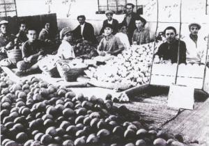 פועלים בבית האריזה לתפוזים בראשית המאה ה-20 Attribution: ארכיון לתולדות רחובות,אוסף קפרא