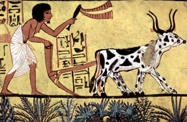Sennedjem plows his fields with a pair of oxen, used as beasts of burden and a source of food.