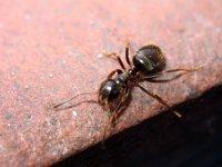 Ant-Attack.jpg