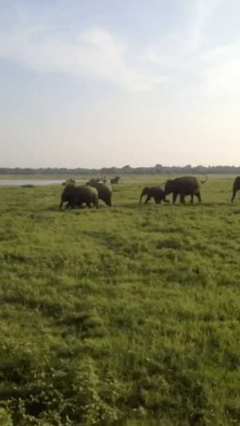 Running elephants in nature