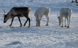 Ylläs, Lapland 8