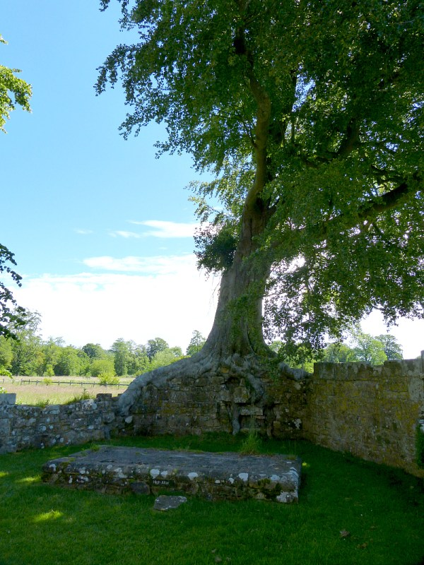 Tree altar in Bayham Old Abbey