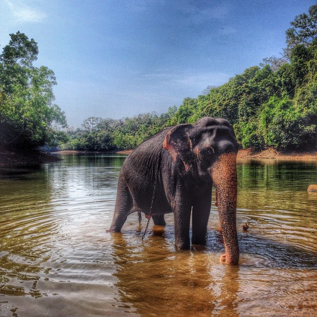 Elephant Orphanage, Kerala