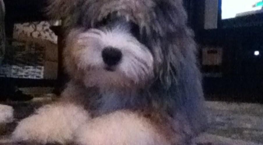 Ozzie 6 months old2