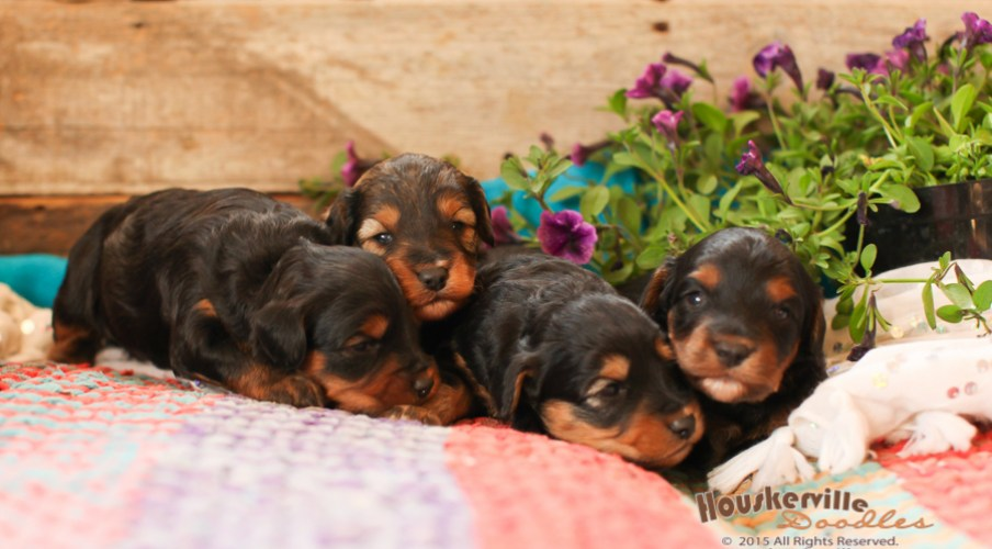 !Puppies Out of Shania