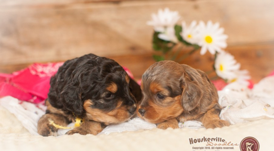 Sisters :) - Puppies Out of Shania