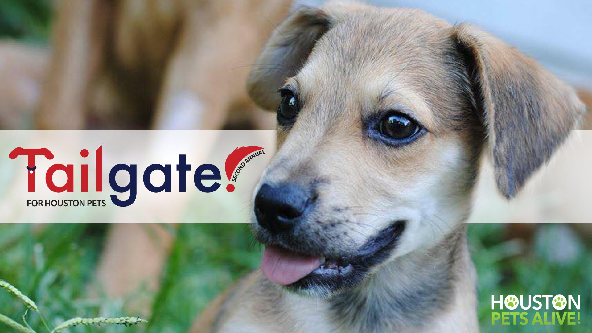 Noble 7070c719 Cfcd 428c 8d5c 9cc04fe7a334 Houston Pets Alive Adoption Houston Pets Alive Chipotle bark post Houston Pets Alive