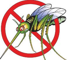 Mosquitoes in Malta - How to Avoid Them