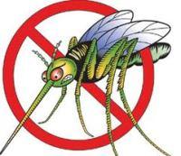 Mosquitoes in Malta