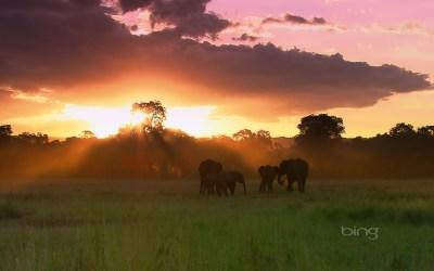 Herd of elephants, Masai Mara National Reserve, Kenya | HD Wallpapers