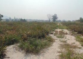 Land For Sale in Hua Hin
