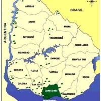 Ubajay: frutal nativo de Uruguay
