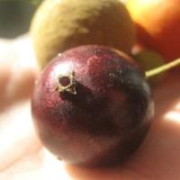 Las mejores frutas nativas de Argentina y países limítrofes