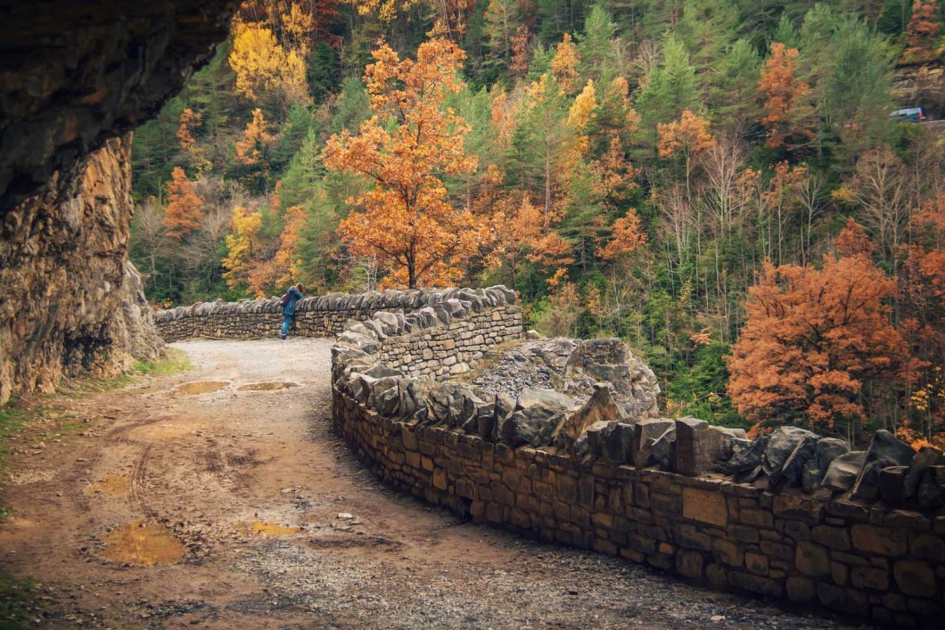 Abedules en el cañón de Añisclo. Foto http://aisber.com