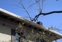 Image of squirrel highway branch on roof