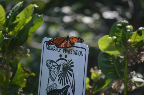 Image of monarch on sign