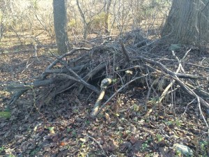 Image of a brush pile