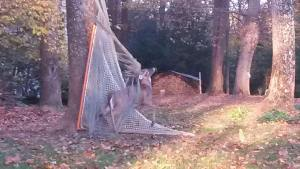 Image of deer caught in lacrosse netting made of fishing net
