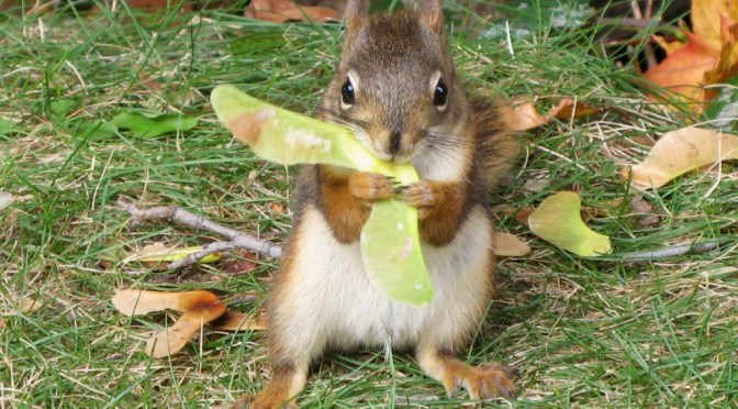 Squirrels: Nature's Real Gardeners