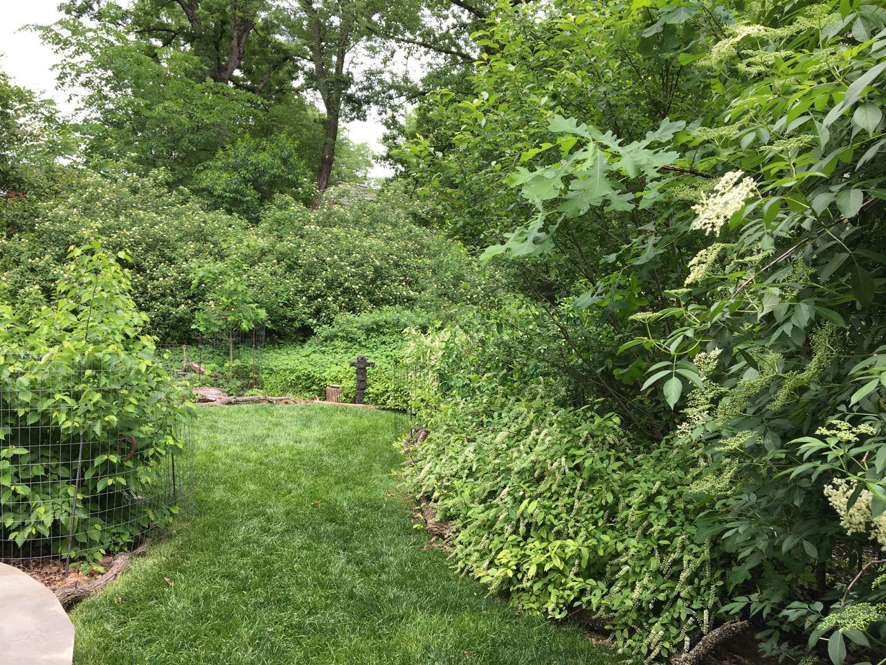 humane gardener cultivating compassion for all creatures great
