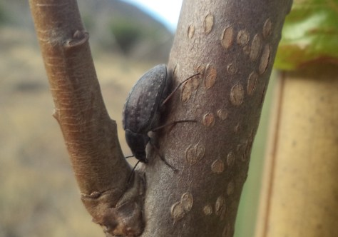 Image of beetle closeup in Soledad Robledo's garden