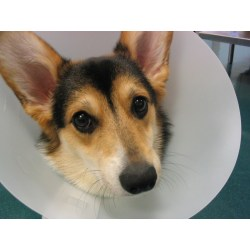 Small Crop Of Homemade Dog Cone