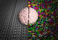 Brain Based Research and the Social Sciences