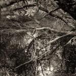 naia-rochefort en terre-20