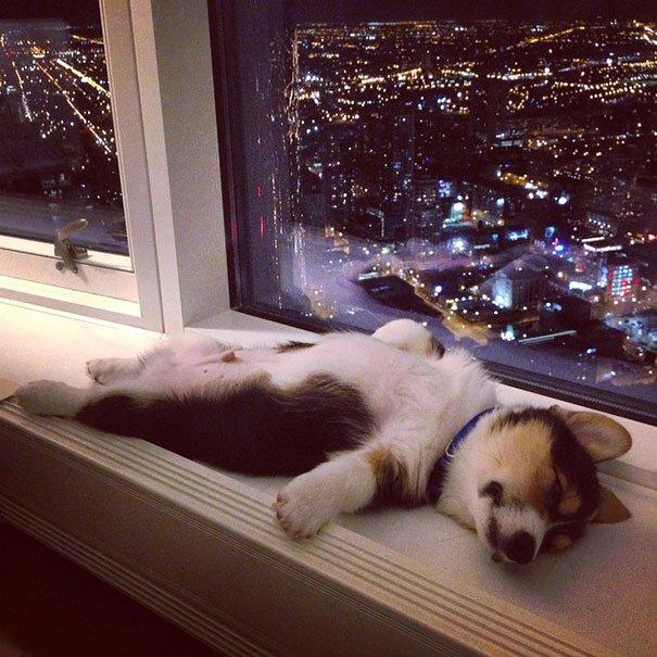 20 גורי כלבים שיכולים לישון בכל מצב! קורע מצחוק!