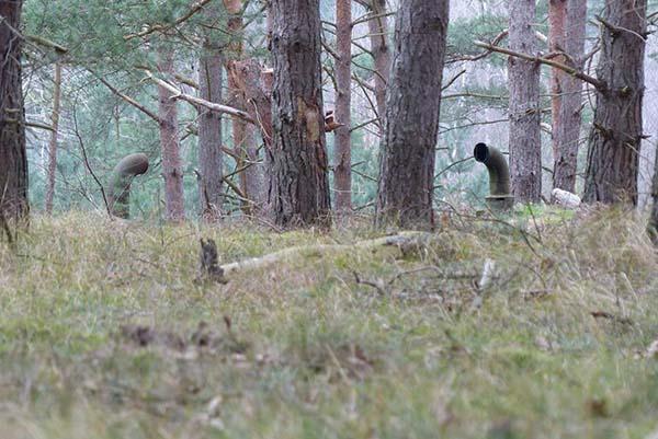 הם מצאו את הצינורות המוזרים האלו ביער, אבל מה שהסתרר מתחת...OMG!