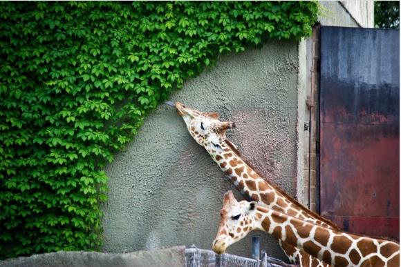 16 תמונות מגניבות שפשוט עושות לפרפקציוניסטים טוב בעיניים!